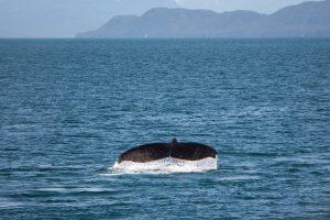 Walvis Whale Route