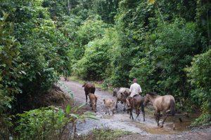 Costa Rica platteland