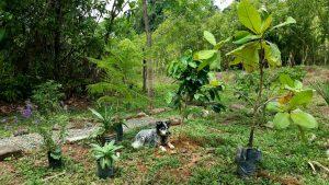 Garden Costa Rica