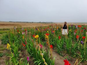 Bloemen Opaalkust